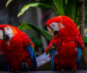 Topeka Zoo - Parrots | Topeka,KS