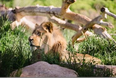 Gardens, Parks & Zoos in Salt Lake