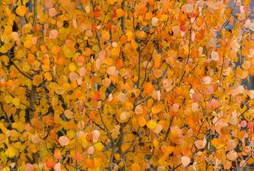 Salt Lake's Fall Foliage Preview