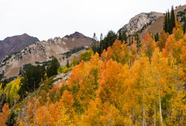 Fall Colors in Little Cottonwood Canyon