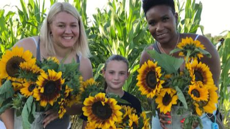 Pails of Sunflowers at Beasley's Orchard