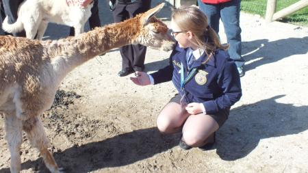 Tour at Montrose Farms Alpaca Ranch