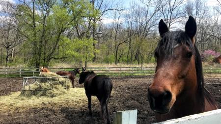 Horses at Natural Valley Ranch