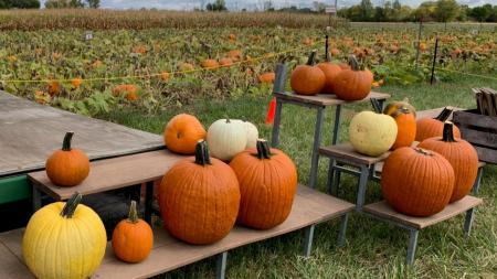 Pumpkins at Hogan Farms