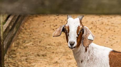 Animals at Freddy Hill Farms 2019