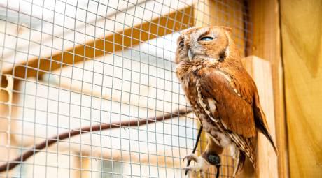 November 2019 Winter Package Social Media Promotion Monty at John James Audubon Center
