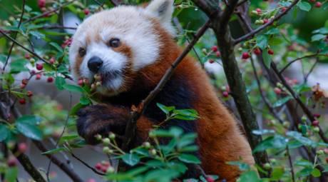Elmwood Park Zoo - Favorite Animals