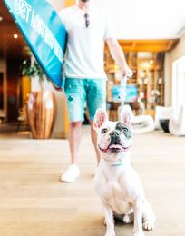 Pasea Hotel & Spa in Huntington Beach Pet Friendly