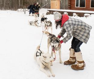 Dog sledding with Harness Adventure Mushing Co.