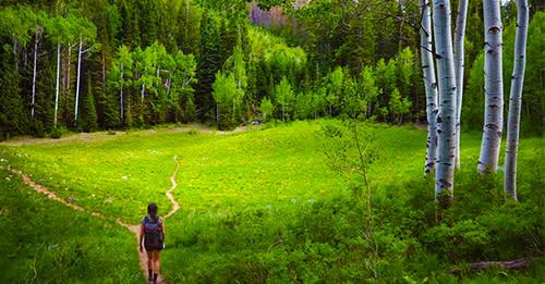 Island Meadow Trail