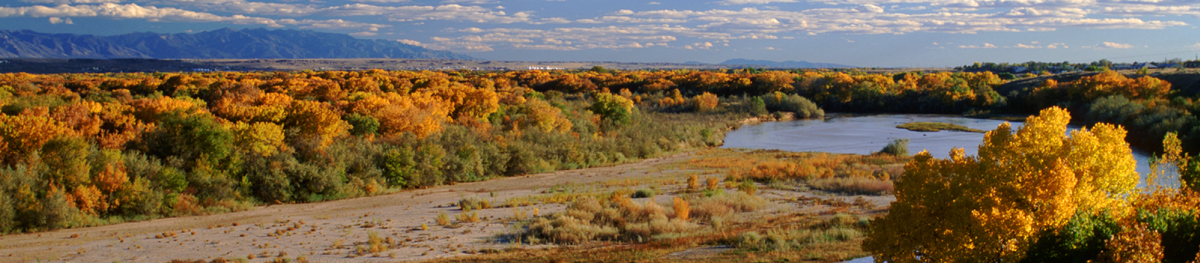 Trees changing color along a river in New Mexico