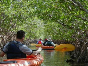 Group kayaking the Wolverton Trail near Placida: Charlotte Harbor Blueway Trail System