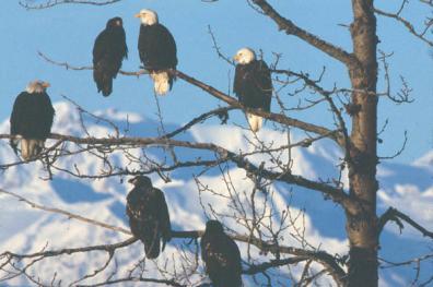 Adkins Eagle Gathering