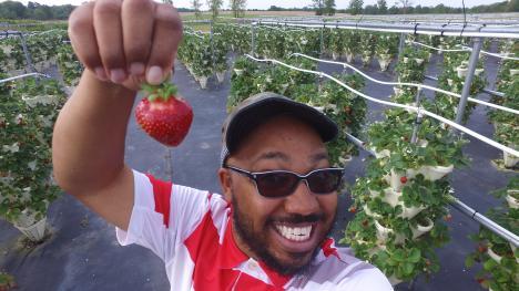 Strawberry Fields Hydroponic Farm - strawberry picking all summer long