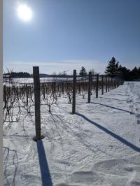 Rove Snowshoe Trail Runs Adjacent to Vineyard