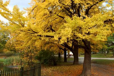 Washington Park in Fall
