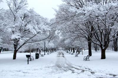 Washington Park Promenade in winter snows.