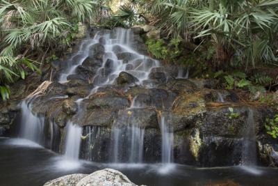 Waterfall at Ormond Memorial Art Museum and Gardens