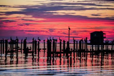 Biloxi Beach Pelican Sunset - Kim Herndon