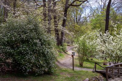 UT Arboretum Trails In Knoxville, TN