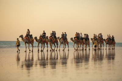 Camel tour group on Cable Beach