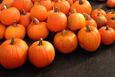 a big pile of Fall harvested pumpkins