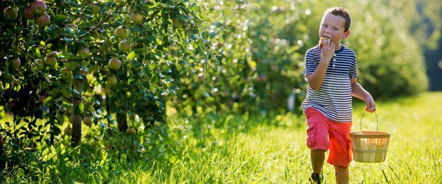 Northwest Indiana Orchards