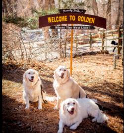 Goldens in Golden 2