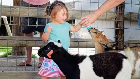 Deanna Rose - Baby Goat Bottle 1_800