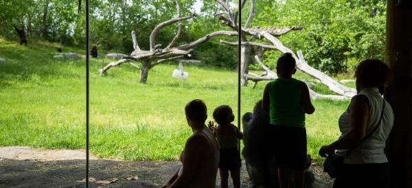 Downing Gorilla Forest at the Sedgwick County Zoo