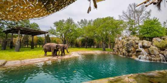 Elephant Springs zoo