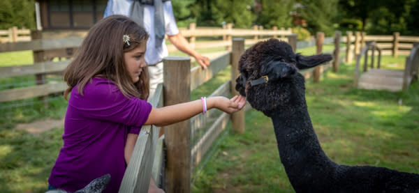 Indian Echo Petting Zoo - Free Things To Do