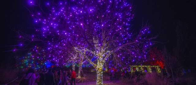 Denver Christmas Lights 2020 Denver Holiday Lights | VISIT DENVER