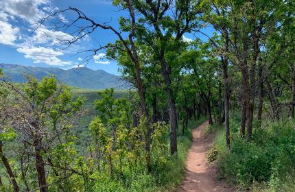 Mountain bike trail, Single Track