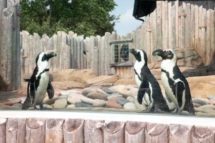 Penguins at Columbian Park Zoo