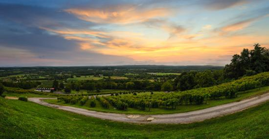 Bluemont Winery
