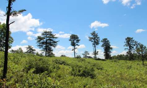 Albany Pine Bush Preserve