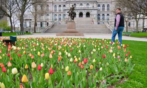 Discover Spring in Albany