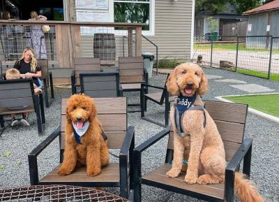 Two dogs sitting in the patio area of The Yard