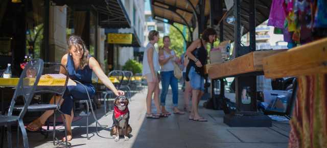 Pet-Friendly | Asheville, NC's Official Travel Site