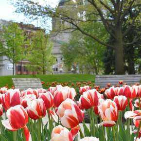 Spring Flowers in Freimann Square - Downtown Fort Wayne
