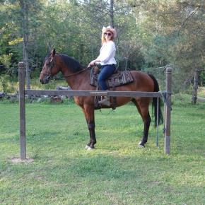Horse at DK Ranch
