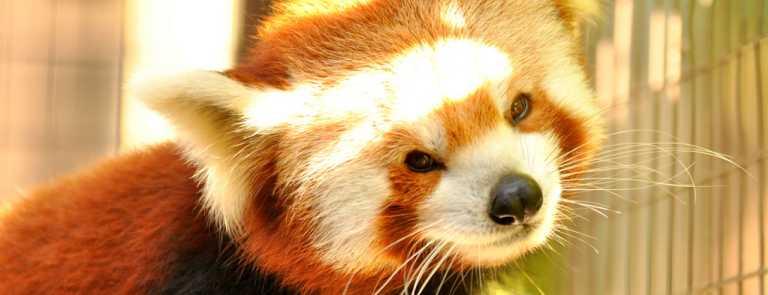 Zoo | VisitGreenvilleSC