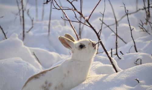 Teatown Bunny