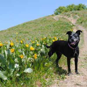 Top Ten Salt Lake Destinations for Dogs (and Their People)