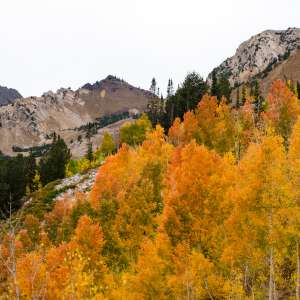 Salt Lake's Best Fall Colors