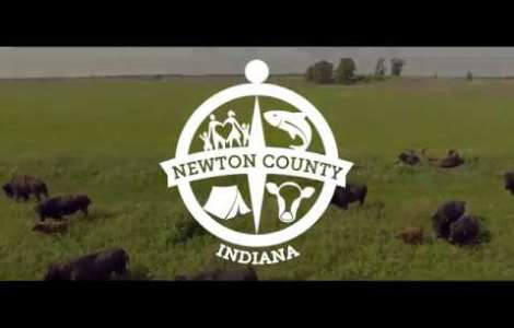 Newton County Bison