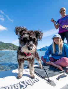 Dog on a paddlebaord