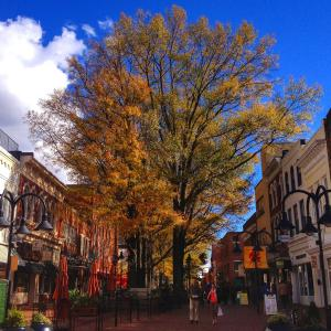 Fall Downtown Mall
