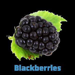 blackberry-farmers market page